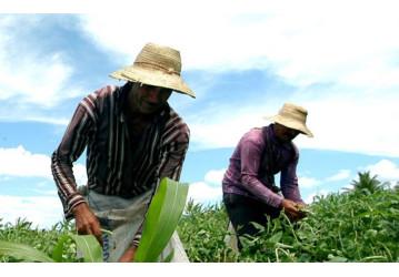 Reforma trabalhista rural de deputado do PSDB quer acabar com salário de trabalhador do campo
